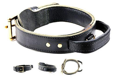 Simplicity Plus Leather Dog Collar