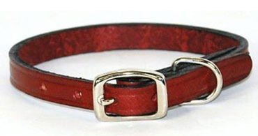 Leather Dog Collars and Leads
